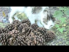Natural Cat Deterrents for Gardens