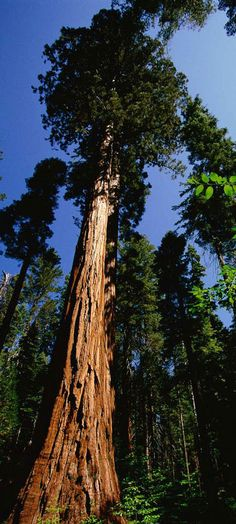 Sequoia National Park , California Amazing Picture of the ...