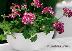 Encuentralas en: http://www.tumatera.co/products/mpa-451715-barca/