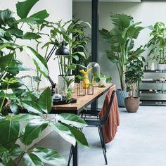Kamerplant / Binnenplant - Planten voor Woonkamer & Slaapkamer