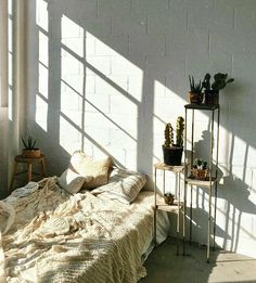 minimal bedroom | indoor plants | low beds | window light | white brick walls | cactus / succulent | college