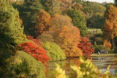 autumn, trees, red, orange