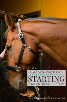 Have you ever wondered about the process involved in taking your equine friend from a young and wild, spirited, unbacked horse, to becoming a wonderfully responsive and responsible riding horse under the saddle?