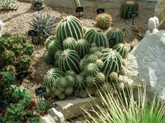 Cactus is a good example of using xeriscaping (reducing or eliminating the need for supplemental water from irrigation) Look for plants in your area that you can substitute and save water.