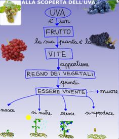 Discovering the grapes The Window On The Tree- Alla scoperta dell'uva Cool Science Experiments, Science Fair Projects, Fruit Party, Cooperative Learning, Free Activities, New Years Eve Party, New Tricks, New Technology, Alter