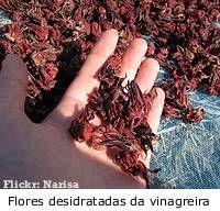 Rosele ou vinagreira flor desidratada                              …