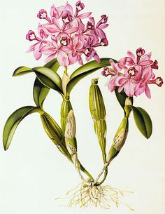 Research Question: where is the nutrient absorption in an orchid?