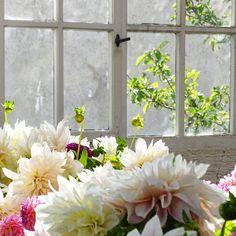 Auf der Mammilade|n-Seite des Lebens: Wohnen in Grün - Ein Tag in München, eine Verlosung für alle Pflanzenfreunde und die Präsentation des Urban Jungle Book im Botanischen Garten, Dahlien
