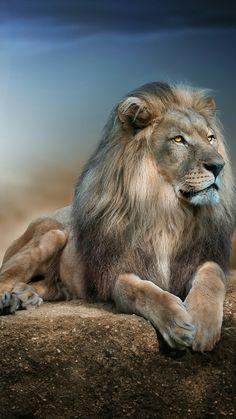 So beautiful. Lion of Judah.