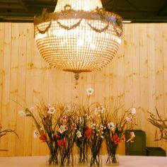 FLVVR for Levi Party Rental Cactus, Chandelier, Ceiling Lights, Party, Flowers, Design, Home Decor, Candelabra, Decoration Home