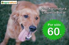 Oferta en Limpieza Bucal para Perros! Agronatura, tu Tienda para Animales y Mascotas en Reus(Tarragona) Servicios Veterinario y Peluqueria Canina!
