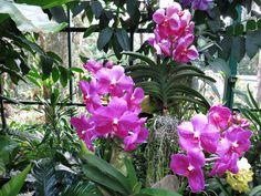 The Botanic Garden of Singapore.