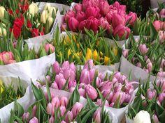 Tulip Bouquets, Bloemenmarkt