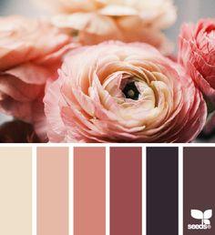 ranunculus hues