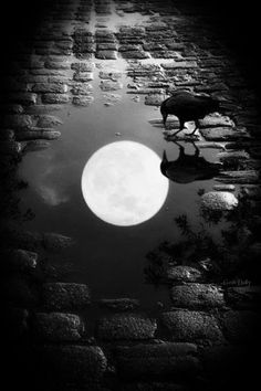 0hmm:  Enlightenment is like the moon reflected on the water. The moon does not get wet, nor is the water broken. Although its light is wide and great, the moon is reflected even in a puddle an inch wide. The whole moon and the entire sky are reflected in one dewdrop… https://soundcloud.com/eggchan77/oblivious-eggchan-gamma-audio oohhmm…ॐ