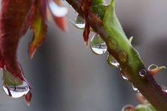 La Rotonda di Badoere in a drop. A pic by Paolo Gamelli