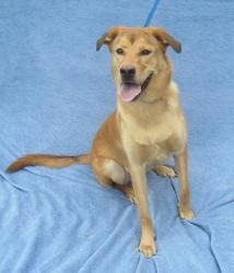 URG'T ~ GEORGIA ~ pinned 9/3 ~ DUKE is an #adoptable Yellow Labrador Retriever Dog in Marietta, GA. Duke is a real sweetheart. He is about 9 months old and weighs 68 pounds. His family left him at the shelter on 08/22/2012. They sai...Cobb County Animal Shelter, 1060 Al Bishop Drive Marietta, Georgia 30008, call (770) 499-4136 for more information.
