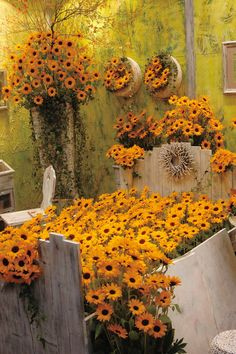 A Slathering Of Sunflowers Featuring Vincent's Choice! Sakata Ornamentals