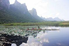 บึงบัว สามร้อยยอด เดินเที่ยวชมบึงบัวบนสะพานไม้ Mountains, Nature, Travel, Naturaleza, Viajes, Trips, Nature Illustration, Outdoors, Traveling