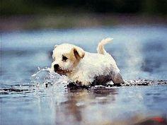 36 Dog Swimming