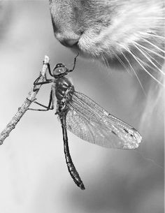 "Dragonfly: ""You don't really want me! I wouldn't even be an appetizer!"""
