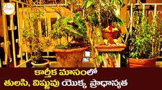 Karthika Masam 2015 Special   Importance of Vishnu and Tulasi   Hindu Tr...