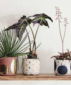 Design Crush: Let's Get Modern | Cutest little polka dot pots for your plants.