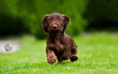 Heee, little puppie... by Petra Spoerle-Strohmenger on 500px
