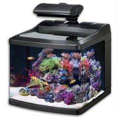Oceanic 36015 BioCube HQI Aquarium, 29-Gallon