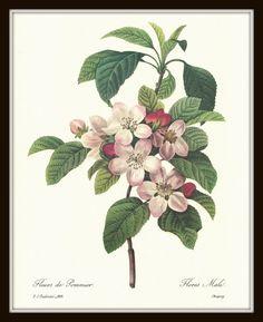pine tree botanical prints - Google-haku