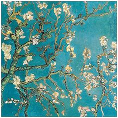 The striking pale blossoms against the rich teal background in Van Gogh's Almond Blossom Canvas Wall Art will brighten any décor.