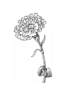 black and white carnations drawing Coloring Pages For Grown Ups, Coloring Book Pages, Carnation Drawing, Carnation Tattoo, White Carnation, Copics, Carnations, Digital Stamps, Colorful Flowers
