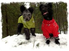 Nässla and Mops in winter  clothes from Hurtta.