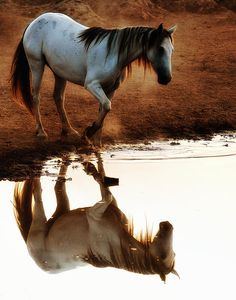 This could be Stonn, the horse belonging to Angusel (Lancelot) in The Dragon's Dove Chronicles (Dawnflight, Morning's Journey, etc.) by Kim Headlee