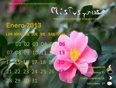 Mistusynos... Mis, tus y nuestros: 01/01/2013 - 02/01/2013
