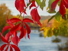 Beauty out of focus  Brownville, Maine  By Marilee Page