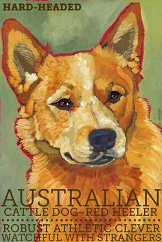 Sums it up completely. Australian Cattle Dog No. 2 - magnets, coasters and art prints in four sizes