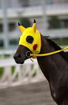Pikachu - NZ racehorse. Profile - http://www.punters.com.au/horses/Pikachu_283441/ Article - http://www.paulickreport.com/news/thoroughbred-racing/racehorse-named-for-cartoon-captures-imaginations-in-hong-kong/