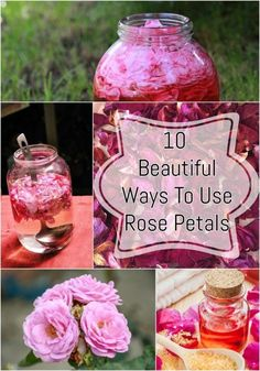 While beautiful to look at, here's why you should pluck some rose petals from your garden. and are my favorite ways to use them! Rose Petals Craft, Fresh Rose Petals, Flower Petals, Rose Petal Uses, Uses For Rose Petals, Rose Gold Metallic, Engagement Ring Rose Gold, Vintage Rosen, Drying Roses