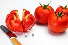 Chefs chopping tomatoes little people big worlds Photograph