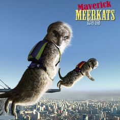 Maverick Meerkats is £9.99 and available from www.themaverickshop.com/calendars/maverick-meerkats/