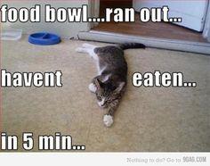 #funny #meme #cats