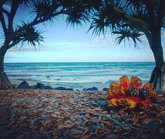 We live in paradise... . . #SunshineCoast #ocean #tropics #lumix #vision