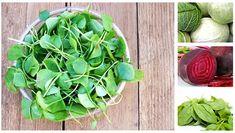 În ultimii ani, cercetările în domeniul nutriției a descoperit foarte multe super-alimente în regnul vegetal: fructe, legume, verdețuri, semințe și nuci. Acestea au fost asociate cu reducerea riscului de cancer și boli cronice. Cele mai bogate … Kale, Spinach, New Jersey, Grapefruit, Vegetables, Healthy, Vitamin D, Collard Greens, Vegetable Recipes