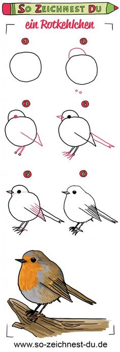 So zeichnest du ein Rotkehlchen This is how you draw a knuckle. From simple circles and strokes you find step by step the sweet bird with our sign instructions. How to draw – the drawing school for children and youth. Art Drawings For Kids, Bird Drawings, Drawing For Kids, Easy Drawings, Animal Drawings, Drawing Ideas, Cartoon Bird Drawing, Simple Bird Drawing, Robin Drawing