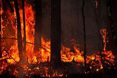 Portugal ist ein einziges Flammenmeer. Eine langanhaltende Hitzewelle mit Temperaturen von