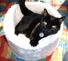 DIY Cat bed...I have a cat, with no bed, why not?
