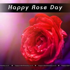 Rose Day - happy valentines day messages - http://www.happyvalentinesday.co.in/rose-day-happy-valentines-day-messages/  #HappyValentineDayGreetings, #HappyValentinesCard, #HappyValentinesDayFreeCards, #HappyValentinesDayGames, #HappyValentinesDayVideoCard, #ValentinesDayQuotations