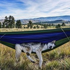 """ourplanetdaily: """"Powderhorn Colorado with @loki_the_wolfdog - Photography by  @loki_the_wolfdog. #OurPlanetDaily"""""""