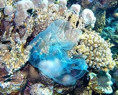 Ο Μεγάλος Κοραλλιογενής Ύφαλος τρώει τη ρύπανση από πλαστικά!